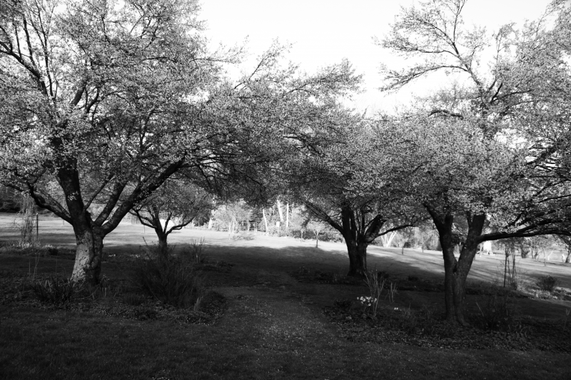 2014-05-01, NJ Botanical Gardens  013, B&W