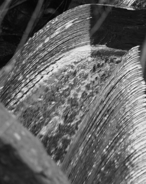 2014-05-01, NJ Botanical Gardens  037, B&W