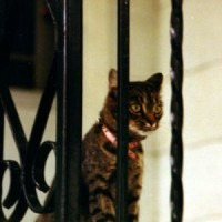 Reflections on the Passing of Dallas the Cat (1987)
