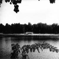 The Pine Lake Song (1999)